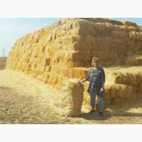 Продам тюки соломи квадратні, пшениця і ячмінь