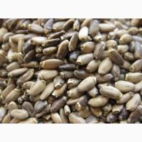 Куплю семена расторопши, рыжея и др