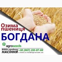 Продаем семена пшеницы Богдана / элита / Агротрейд