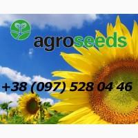 Насіння соняшнику - продаж посівного матеріалу оптом по Україні - Група АГРОТРЕЙД