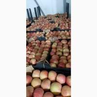Продаєм яблоко зимових сортів