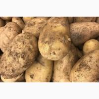 Продаю картофель Сорт ГАЛА