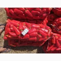 Продам красный болгарский перец, сорт Любовь