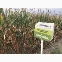 Семена кукурузы СИ Батанга ФАО 340