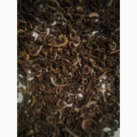 Продам насіння календули, сорт Кальта