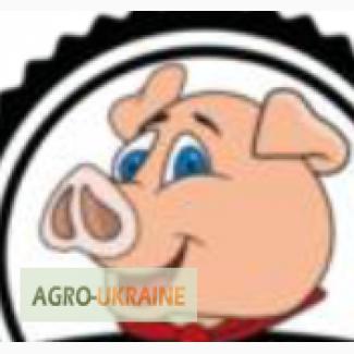 Предлагаем свежее мясо свинина