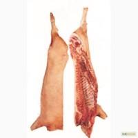 Кублю півтуші свинні 1 категорії (беконки)великим обємом