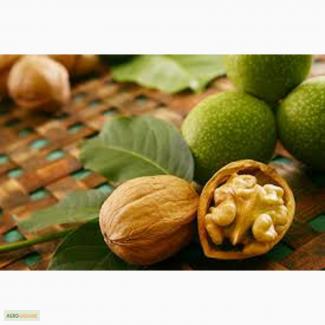 На експорт любой орех грецкий и не токо