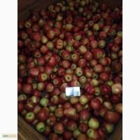 Продам Яблука / продам Яблоки