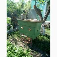 Продаю вулики з бджолами, бджолосім#039;ї