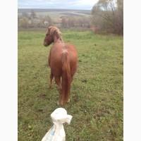 Продати двох коней