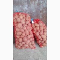 Продам товарную картошку