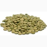 Семена Чечевицы Зеленая. Линза