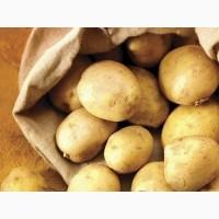 По опту куплю картофель