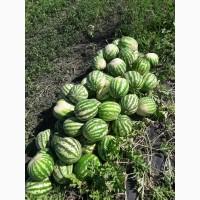 Распродажа арбуза, суходол вес от 2 до 5кг