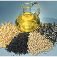 Закупаем зерновые и масленичные культуры