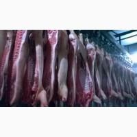 Продам свинину в полутушах, мясной породы