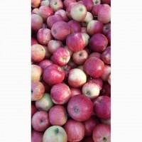 Продам яблоки айдаред джана Голден