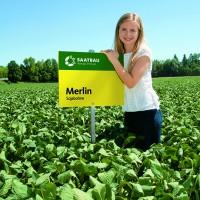 Семена сои Мерлин saatbay lianz, Австрия