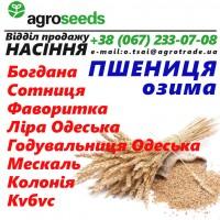 Семена озимой пшеницы от производителя! Все документы -Сертификат, Аттестат, Свидетельство