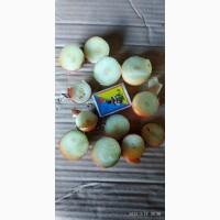 Продам мелкий лук 3-5 см