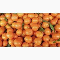 Куплю мандарины