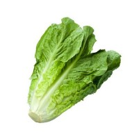 Продам салат ромен