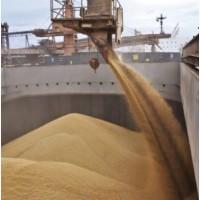Продам кукурузу фуражную на экспорт FOB CIF
