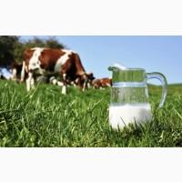 Продам фермерское молоко оптом на постоянной основе