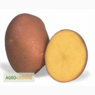 Продам насінневу сортову картоплю по Україні