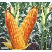 Куплю кукурузу дорого самовывоз