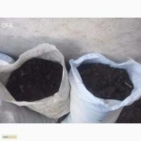 Чернозем, перегной конский (навоз) в мешках, торф