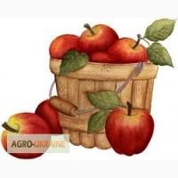 Продаємо яблука оптом