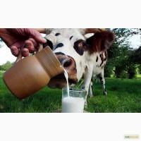 Куплю обрат, обезжиренное молоко, перегон