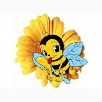 Куплю мед оптом дорого! (без антибиотика), Одесская обл