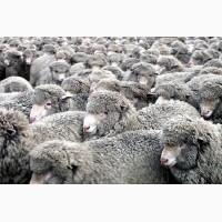 Продажа Целостно-имущественного комплекса по производству животноводческой продукции