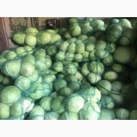 Продам капусту на постоянной основе (ОПТ)
