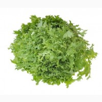 Продам салат фризе