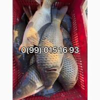 Перевозим зарыбок и живую рыбу! До 6т воды
