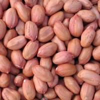 Red Peanut for sale