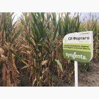 Семена кукурузы СИ Фортаго ФАО 260