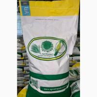 Семена кукурузы Оржица 237 МВ (ФАО 230). Урожай 2020