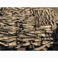 Продам корень петрушки