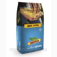Продам семена кукурузы Байер (Монсанто) ДКС 3441, ДКС 3795