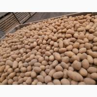 Продам насіневу картоплю.Сітки по 15 кг. Сорти ГАЛА.ТАЙФУН