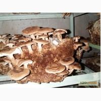 Шиитаке - грибные блоки