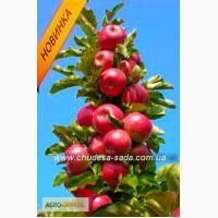 Саженцы колоновидных деревьев яблони, груши, черешня, алыча, слива