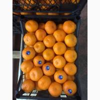 Продам цитрусовые оптом прямая поставка с Турции