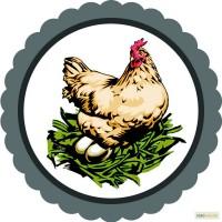 Солотвинская птицефабрика продает яйца куриные от производителя