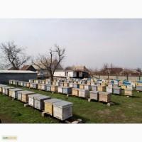 Продам высокопродуктивные пчелосемьи